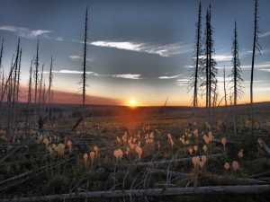 Beargrass sunrise - Glacier Explorer
